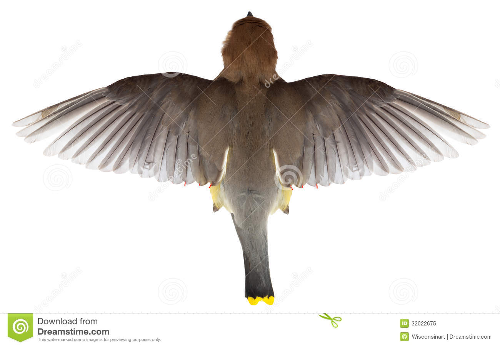 Vliegende Vogel, Hoogste Mening van Vlucht, Vleugels,