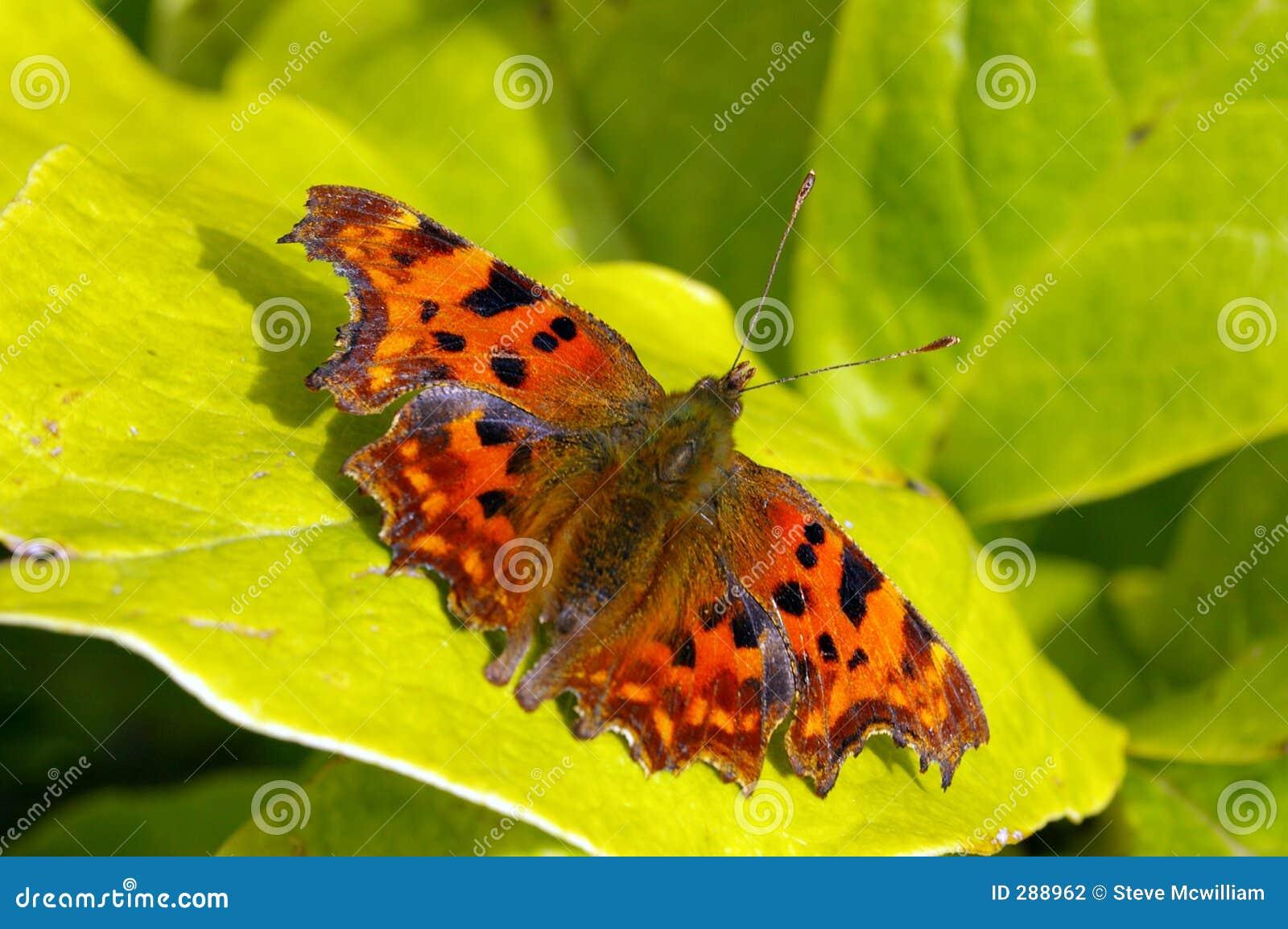 Vlinder 15 van de komma