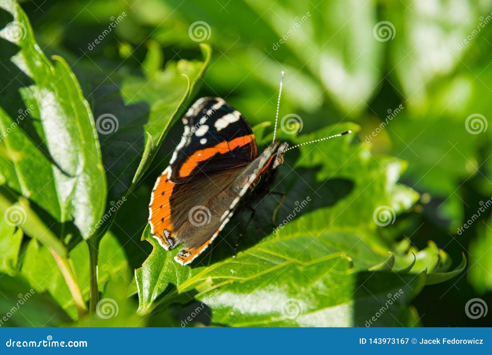 Vlinder dichte omhooggaand op een groen blad