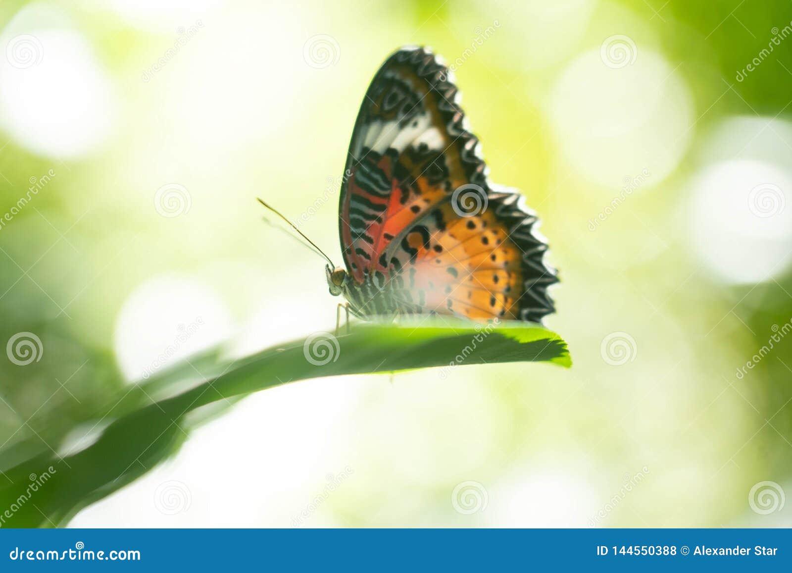 Vlinder die op een Blad rusten