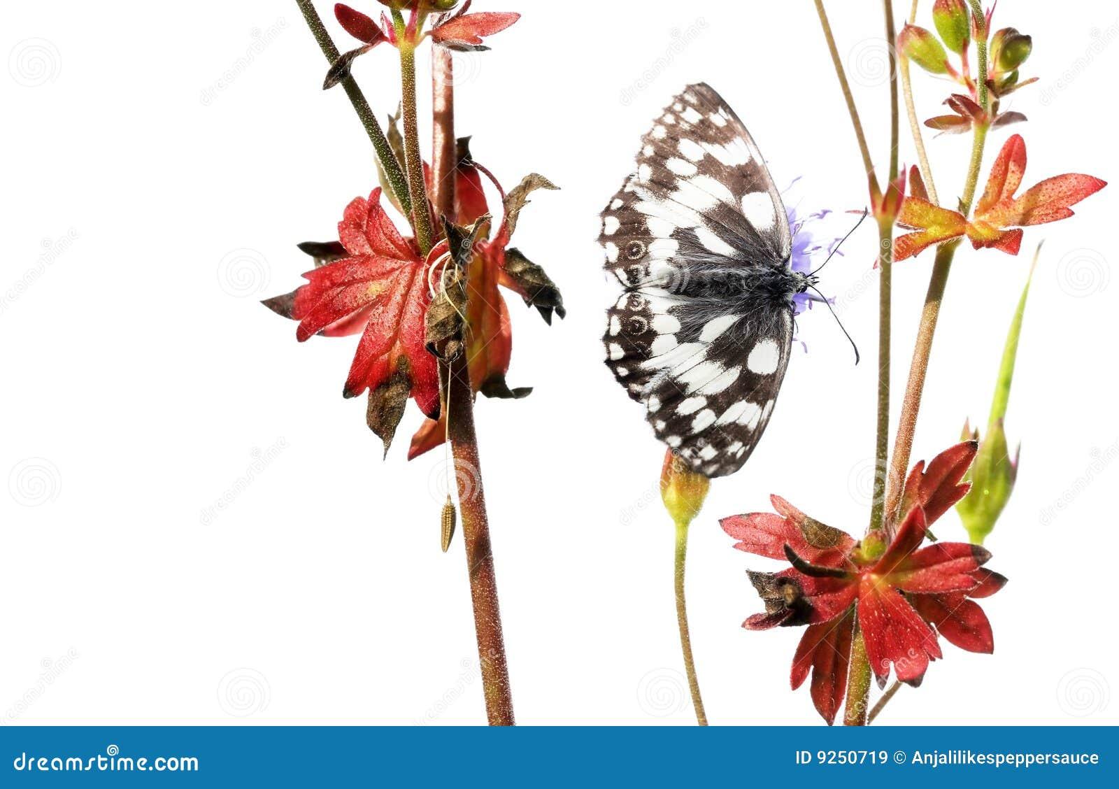 Vlinder en flora