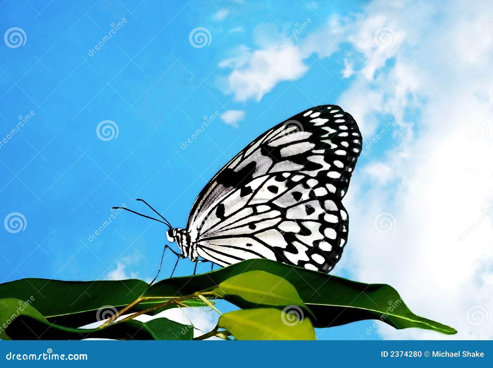 Vlinder en Wolken