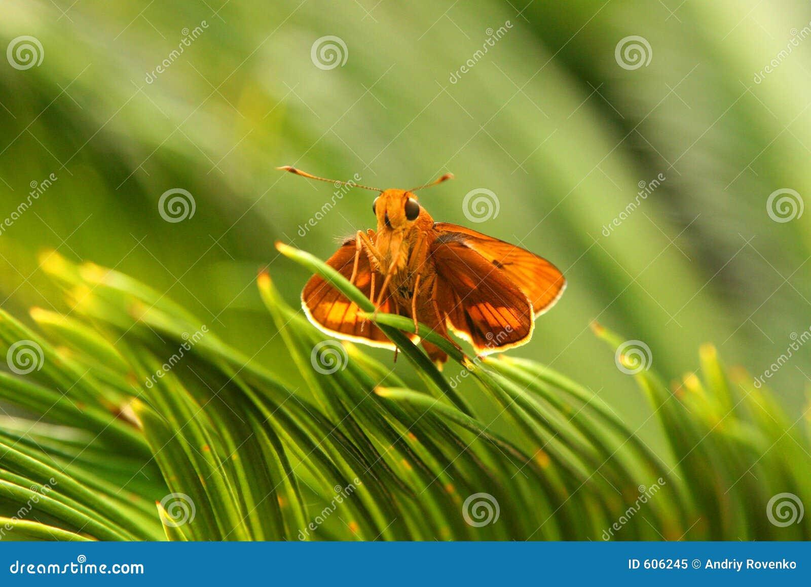 Vlinder in het park
