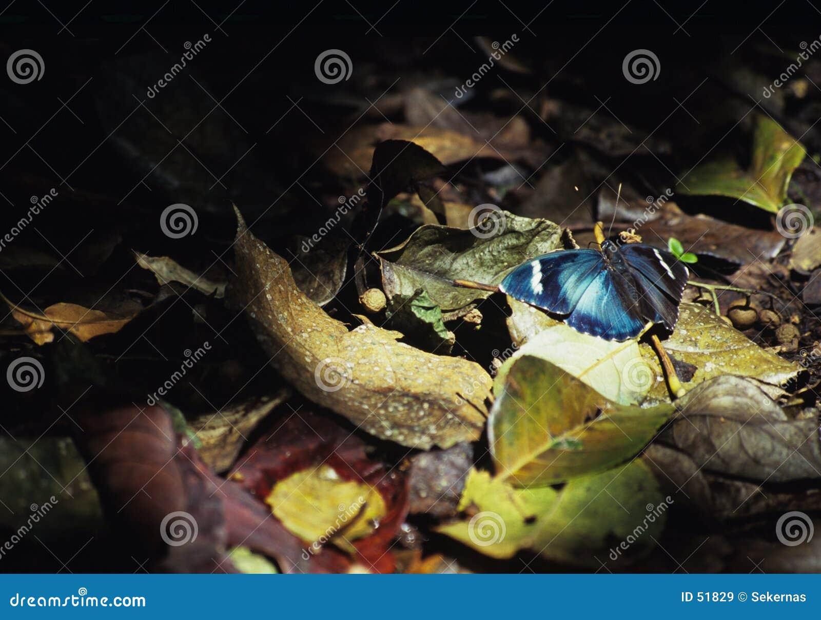 Vlinder in licht