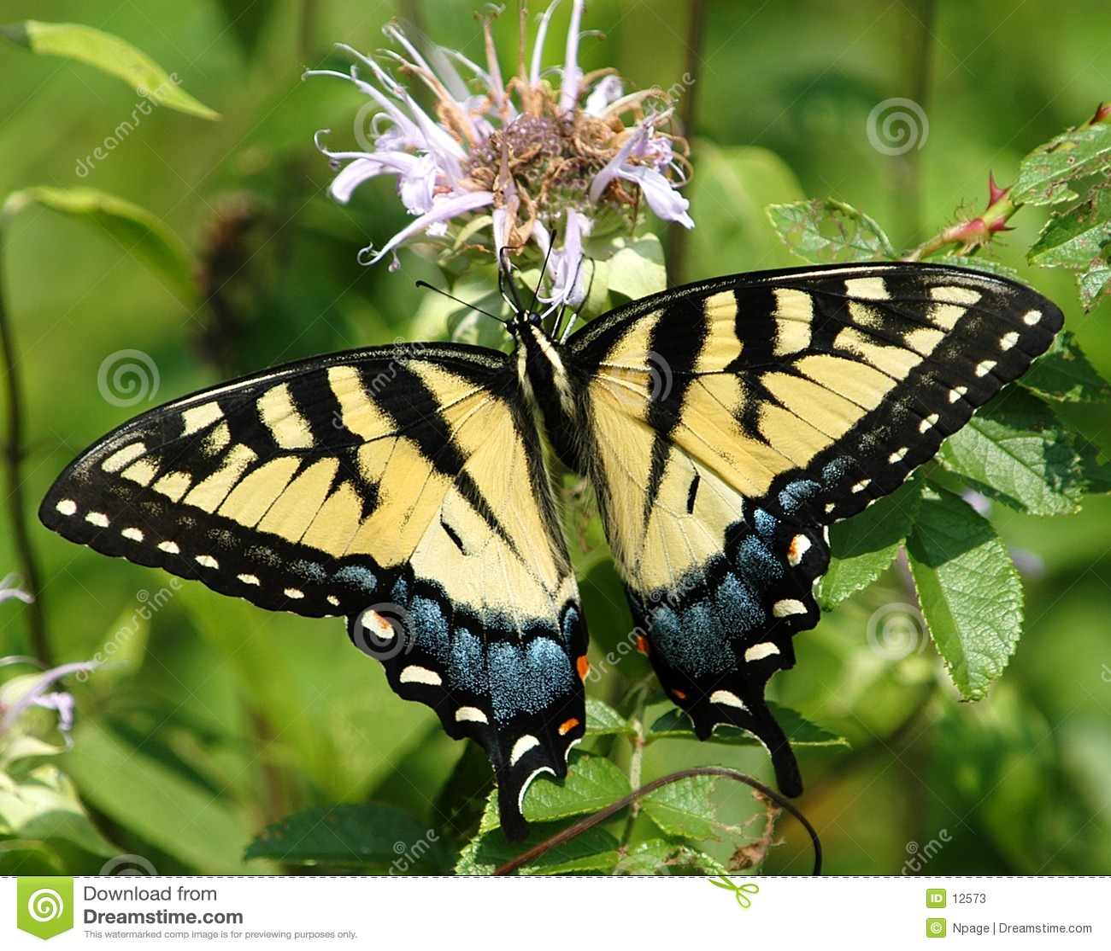 Vlinder No3
