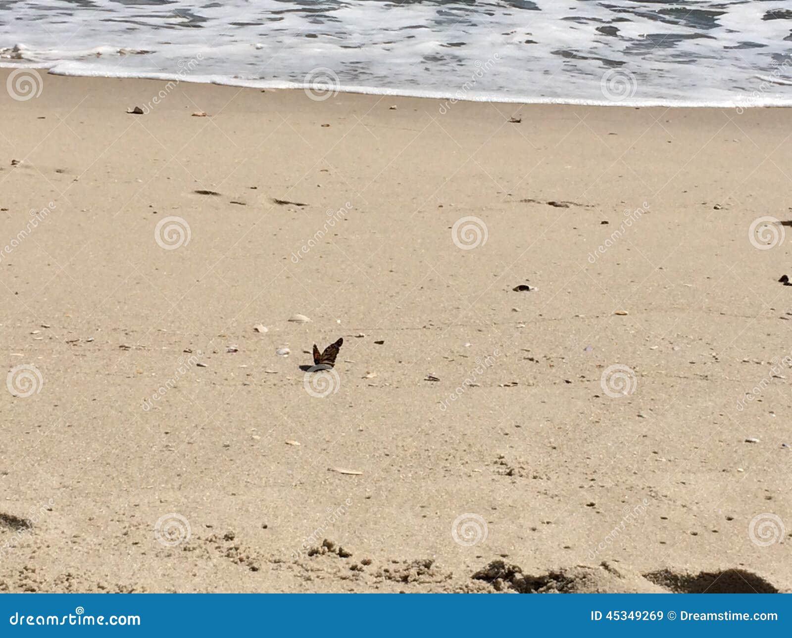 Vlinder op de kust