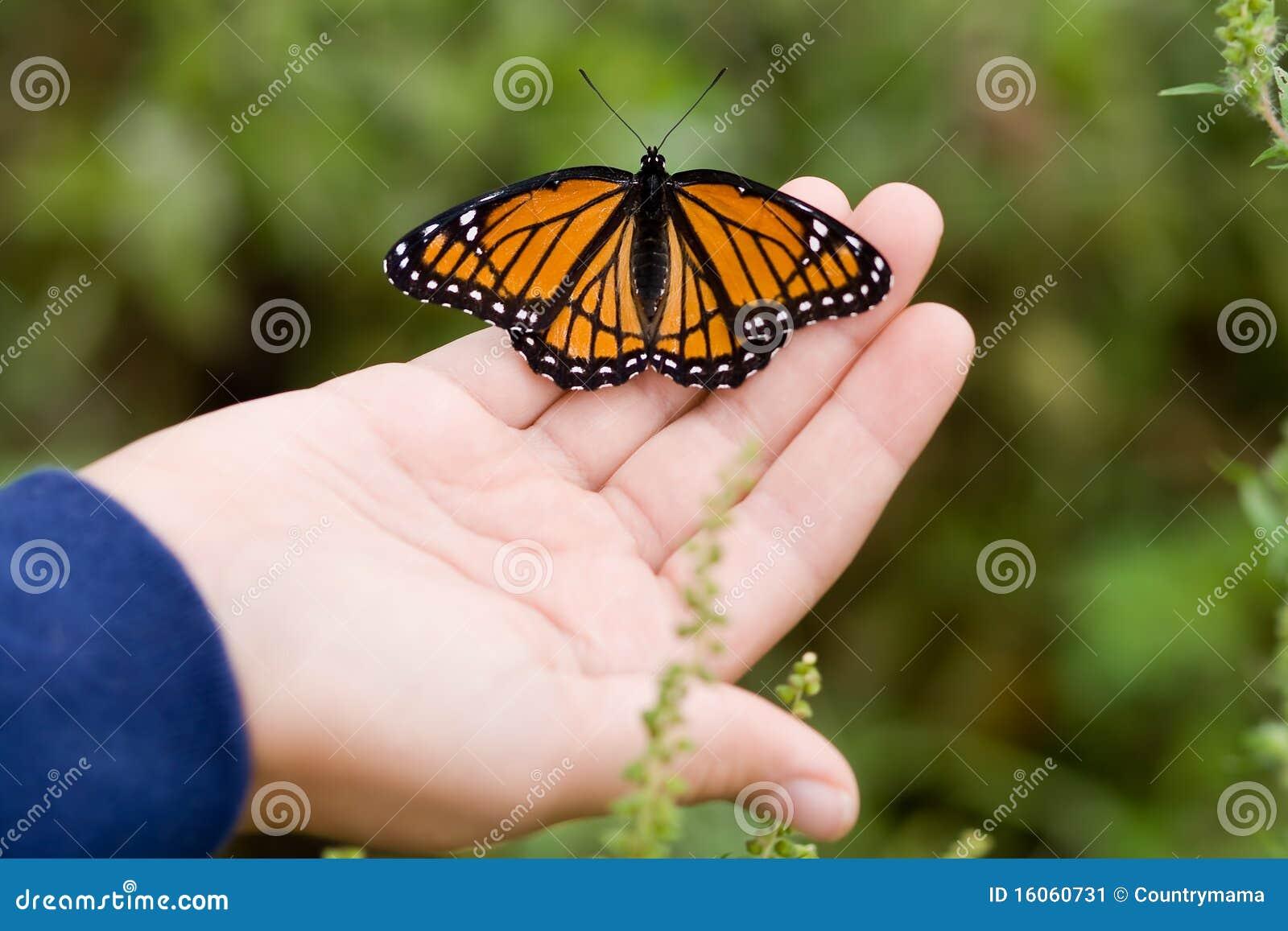 Vlinder op een hand.