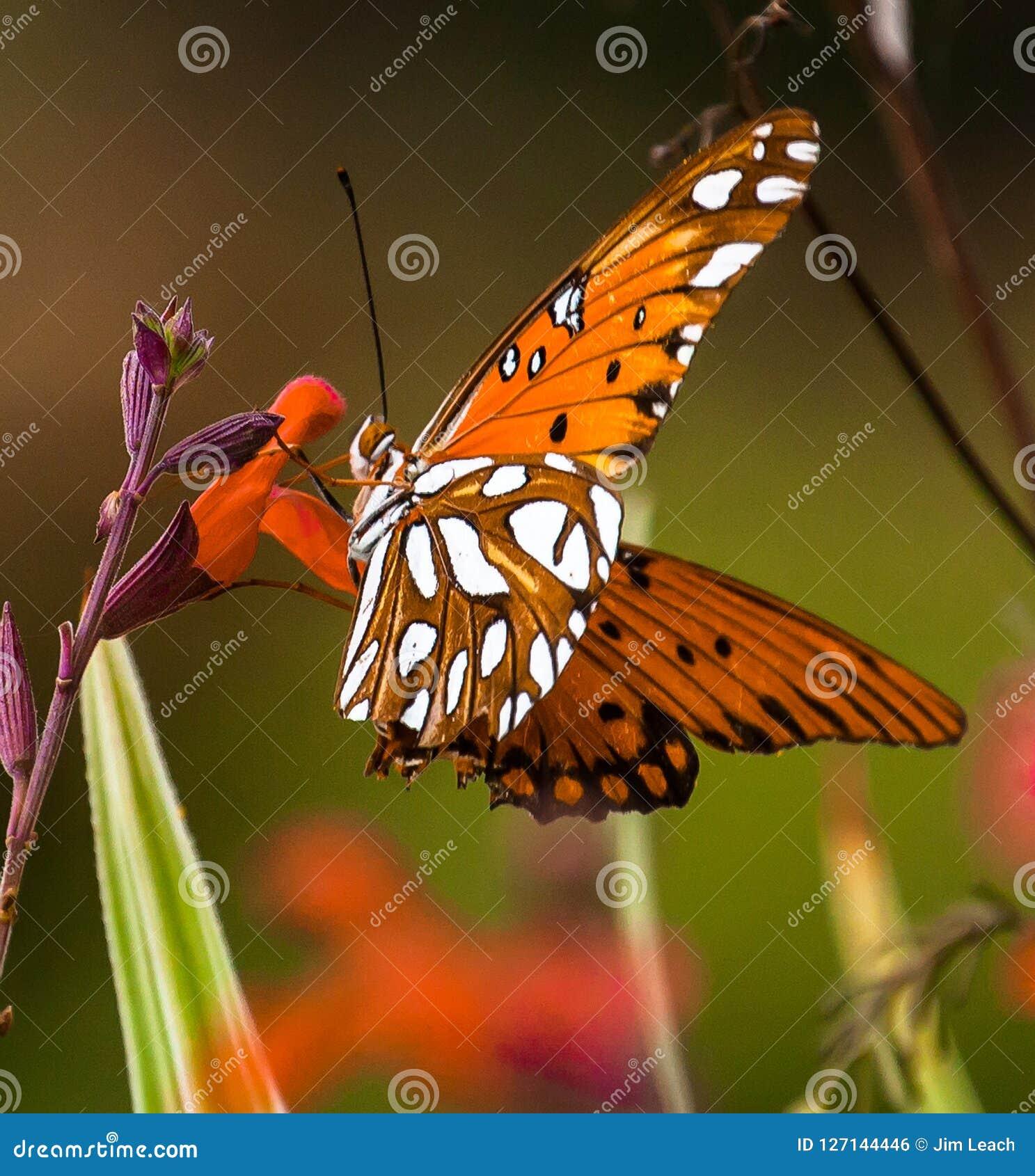 Vlinder op een rode bloem
