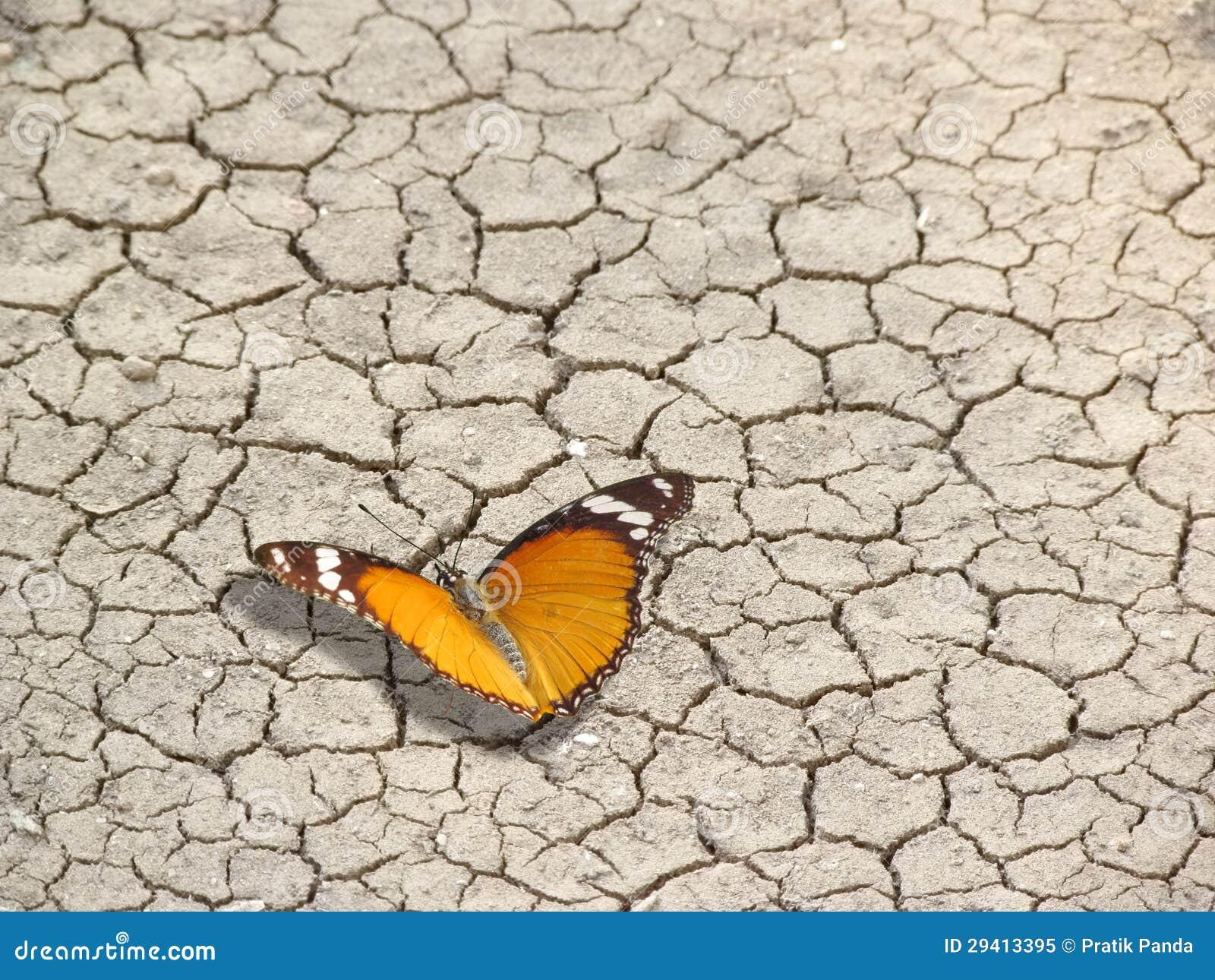 Citaten Leven En Dood : Vlinder op gebarsten aarde het leven en dood royalty