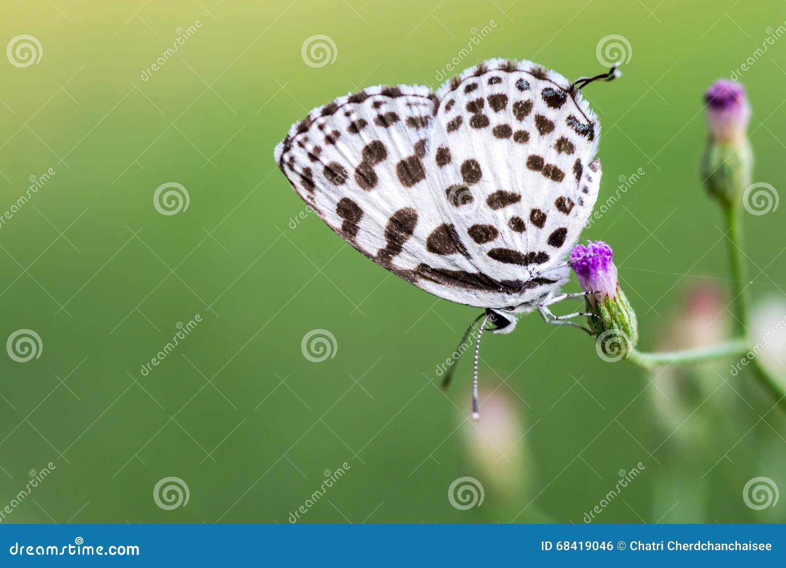 Vlinder op grasbloem