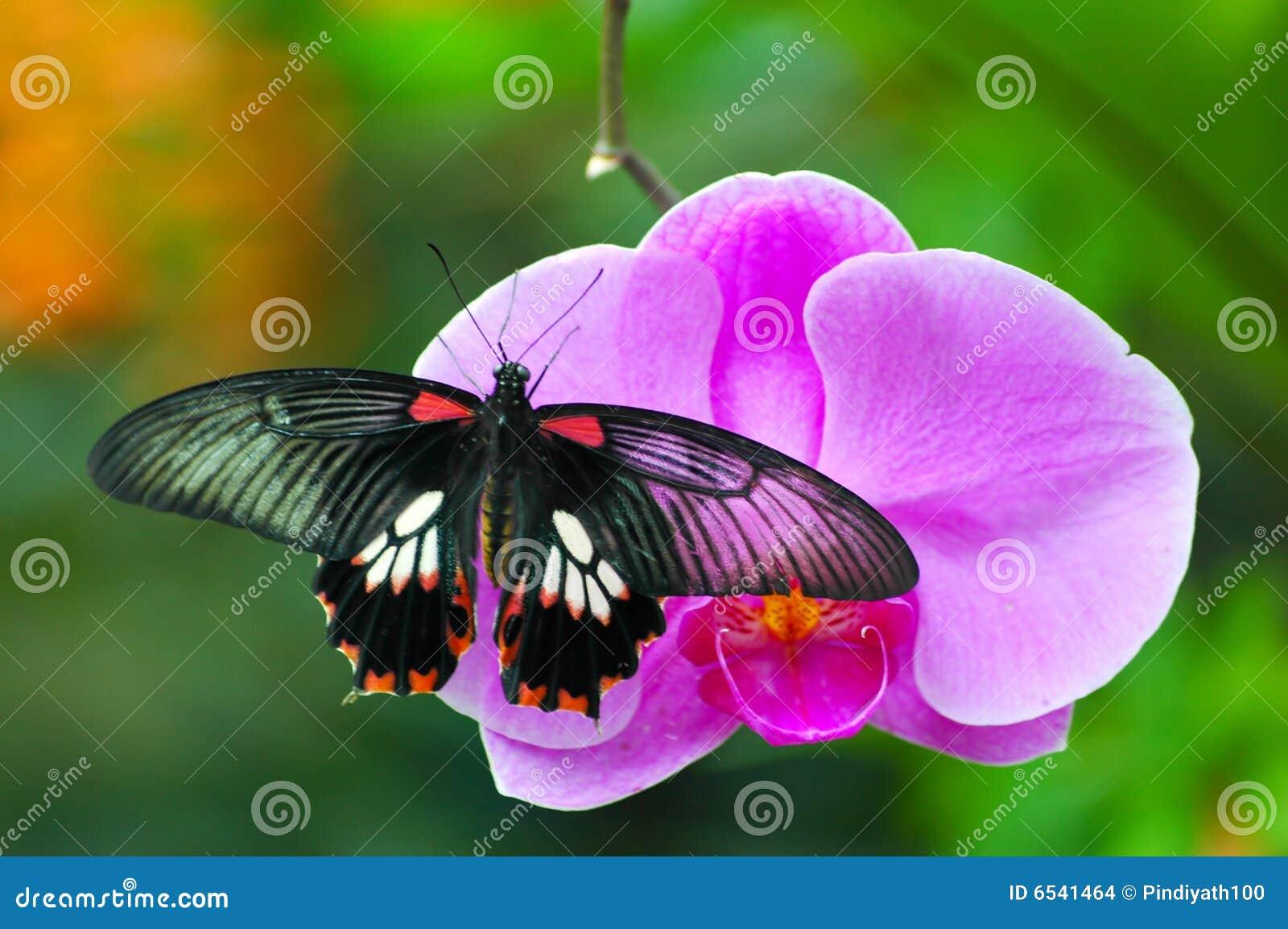 21 mooie kleurrijke vlinder - photo #2