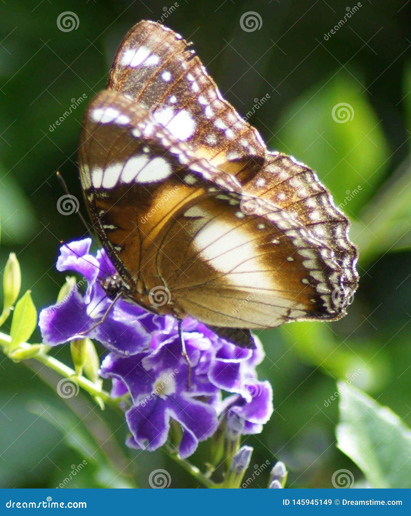 Vlinder op Purpere Bloem