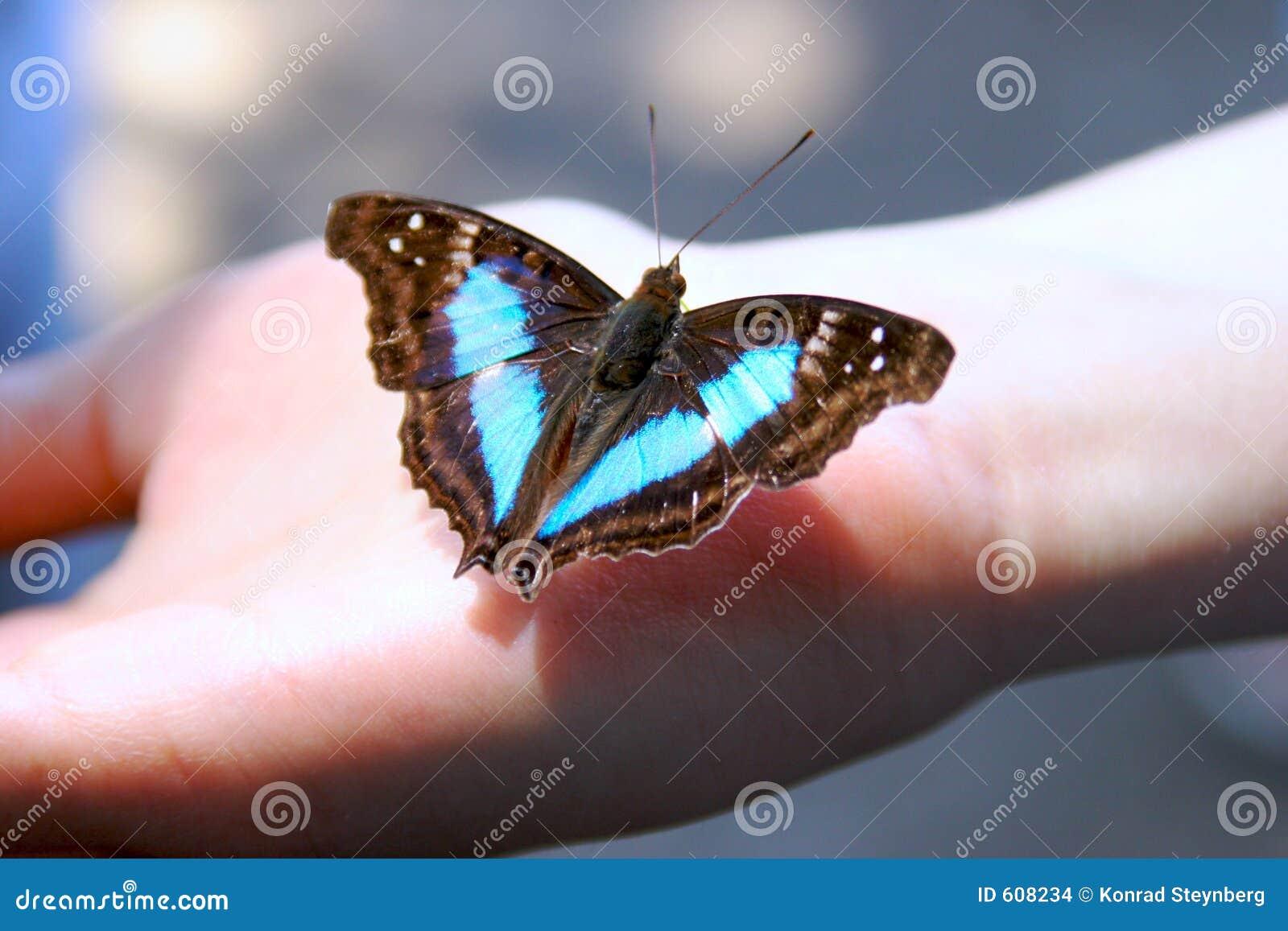 Vlinder ter beschikking