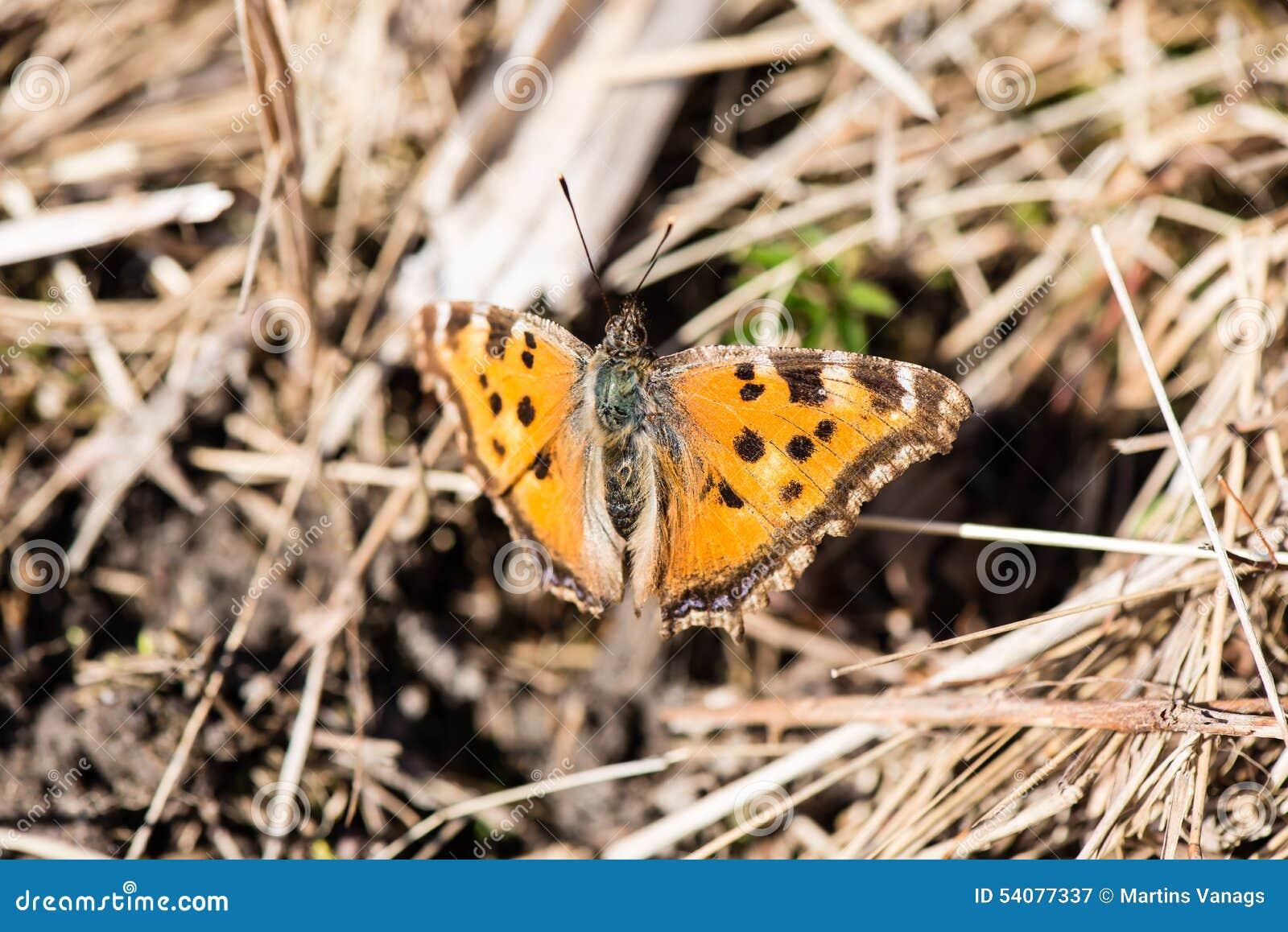 Vlinder ter plaatse