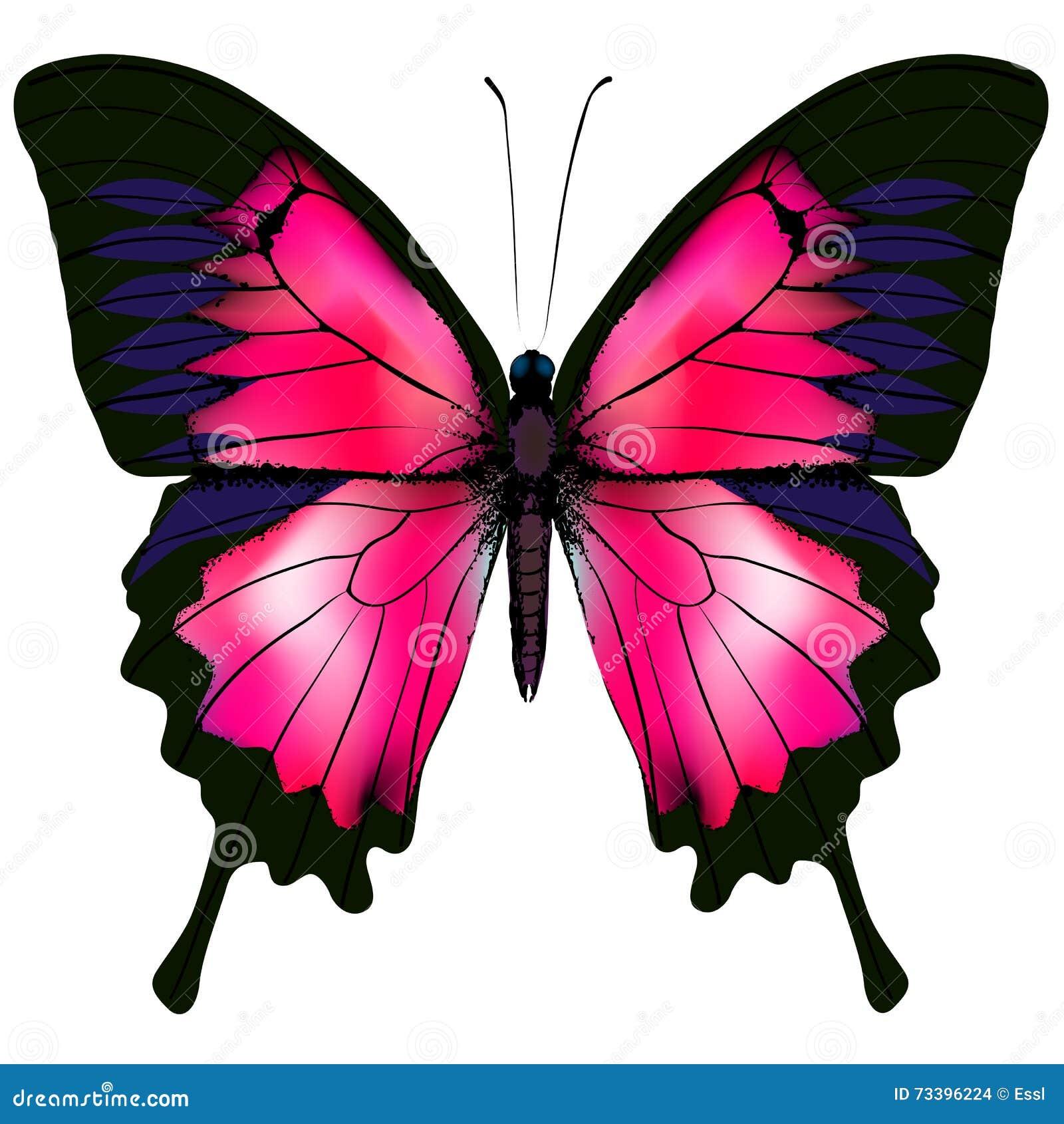 Vlinder Vectorillustratie van rode die vlinder op witte achtergrond wordt geïsoleerd
