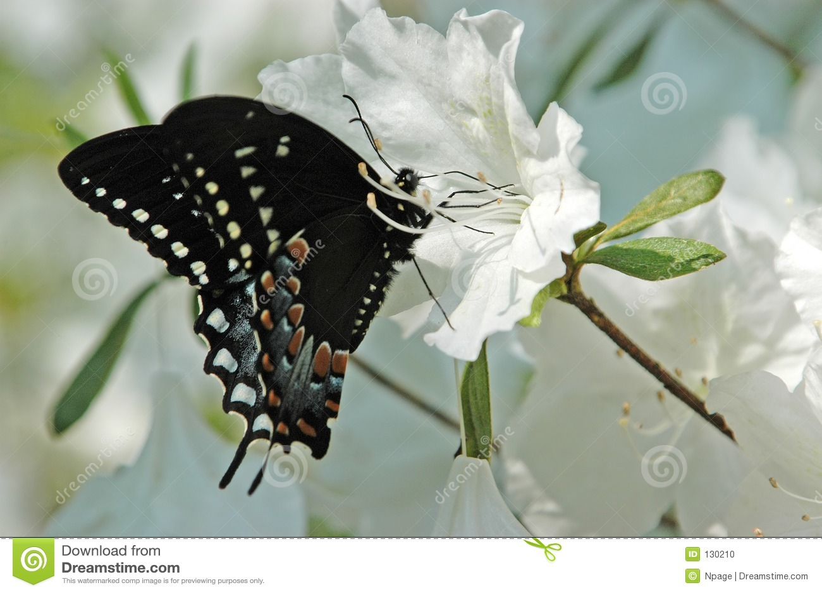 Vlinder XII