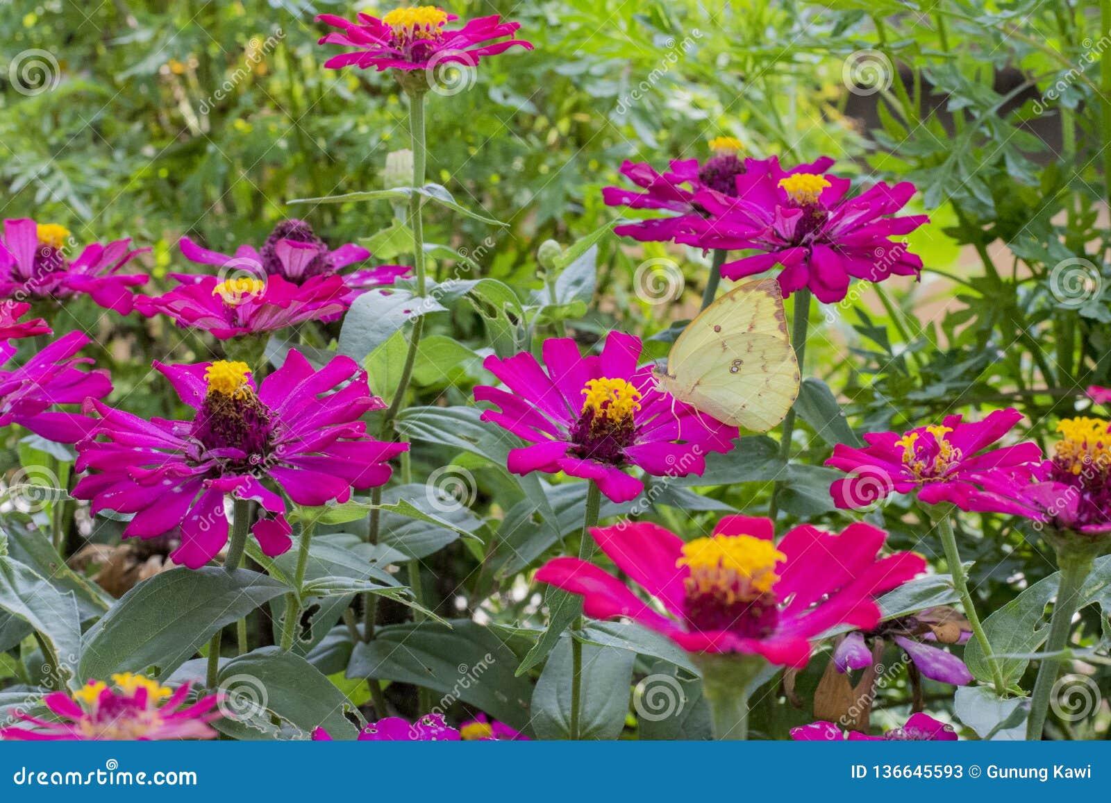 Vlinders in een mooie bloemtuin