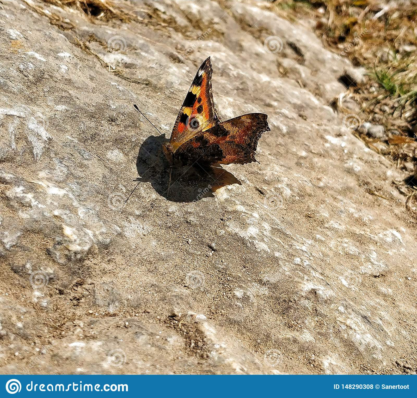 Vlinderzitting op de rots