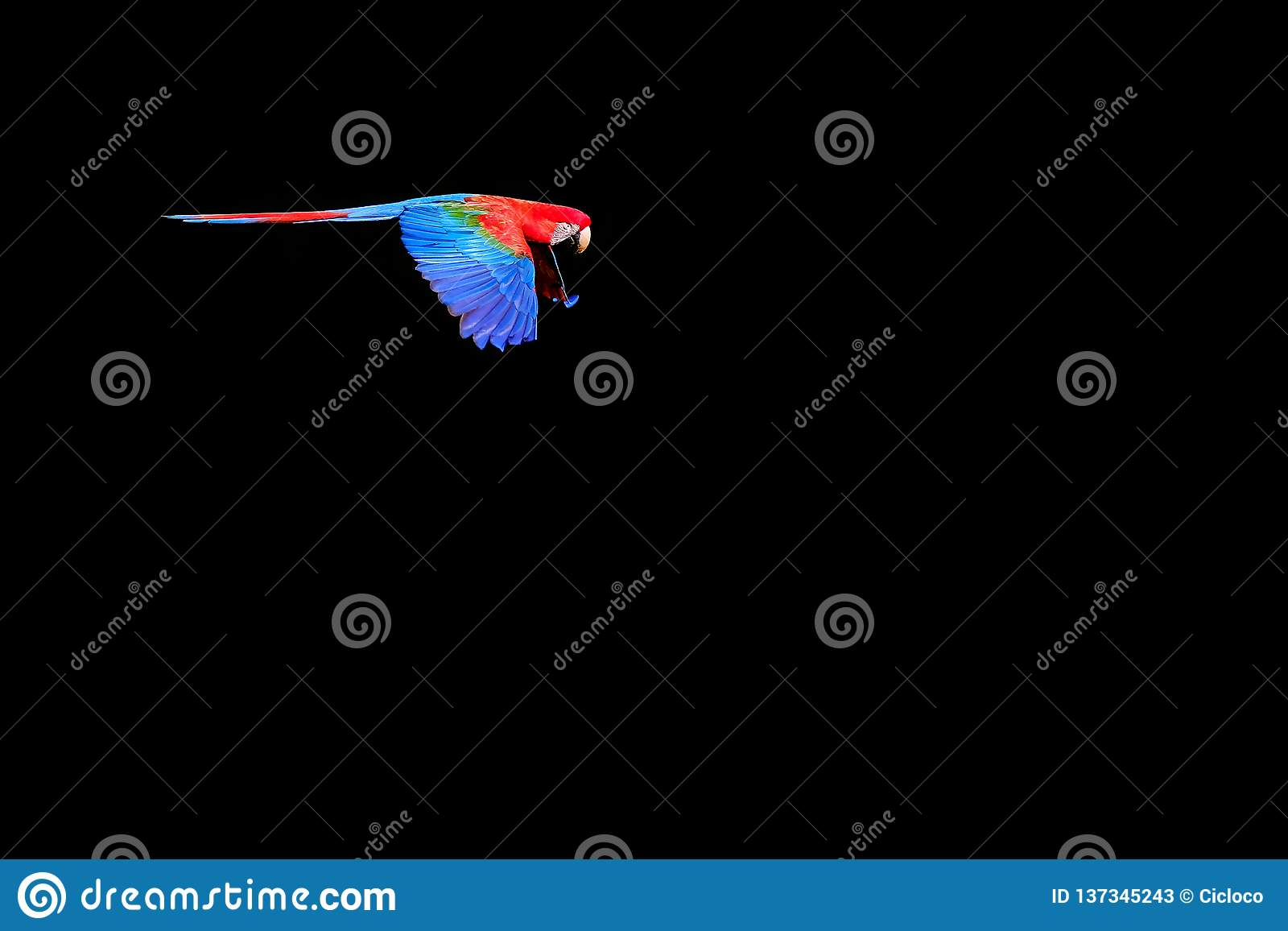 Voando a arara vermelha e verde, Ara Chloropterus, Buraco DAS Araras, perto do bonito, Pantanal, Brasil