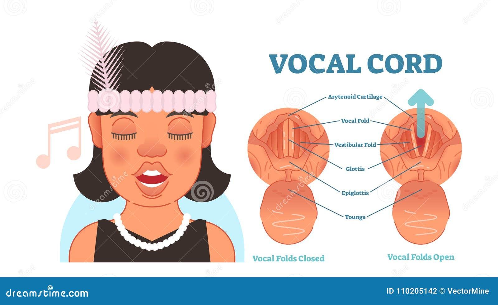 Vocal Cord Anatomy Vector Illustration Diagram, Educational Medical ...
