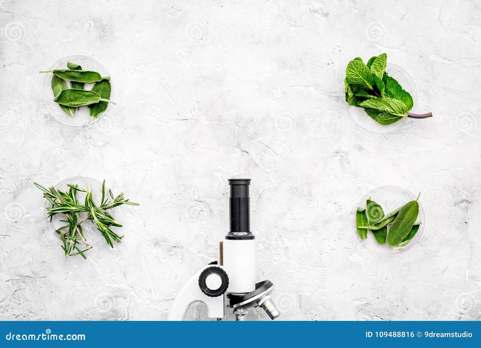 Voedselanalyse Pesticiden vrije groenten Kruidenrozemarijn, munt dichtbij microscoop op de grijze ruimte van het achtergrond hoog