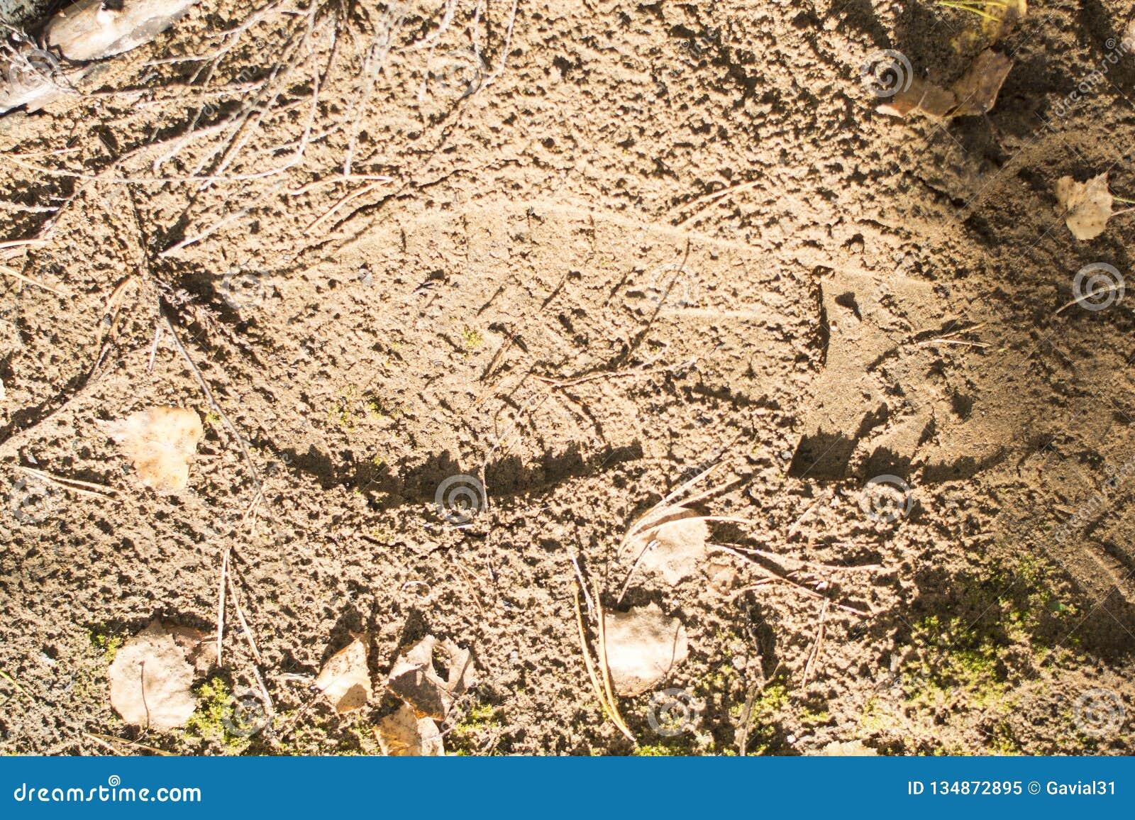 Voetafdruk op het zand