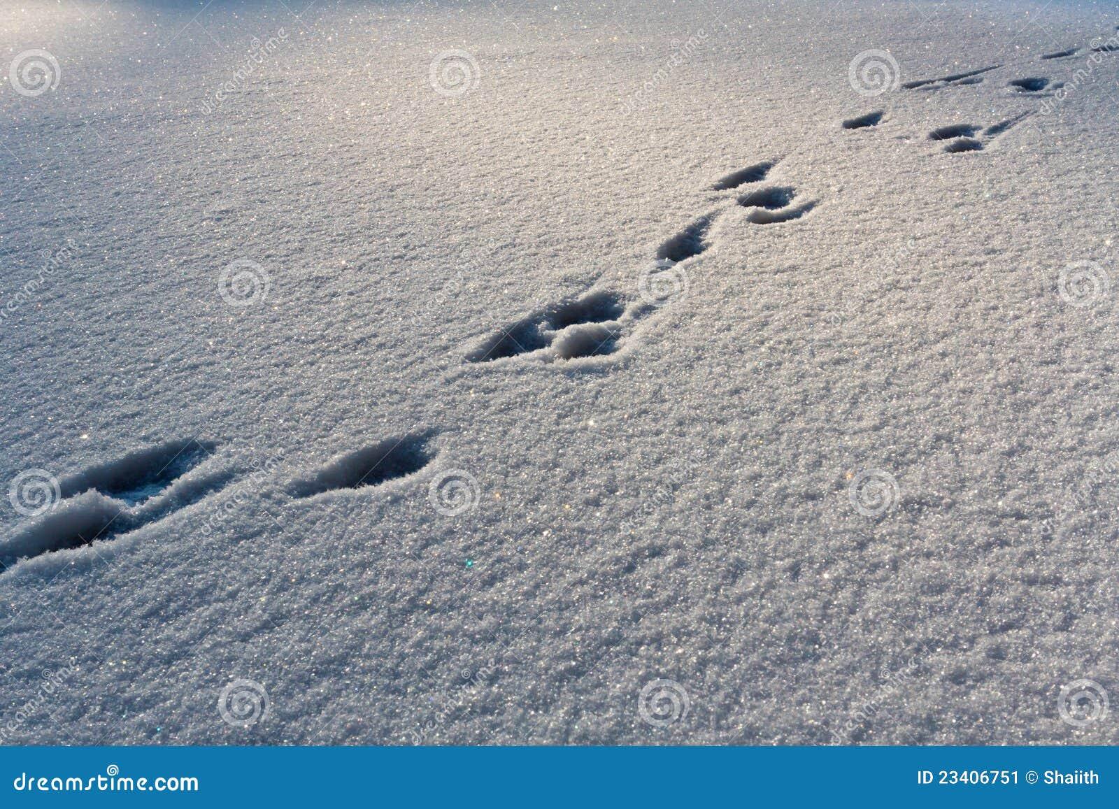 Voetstappen op de sneeuw
