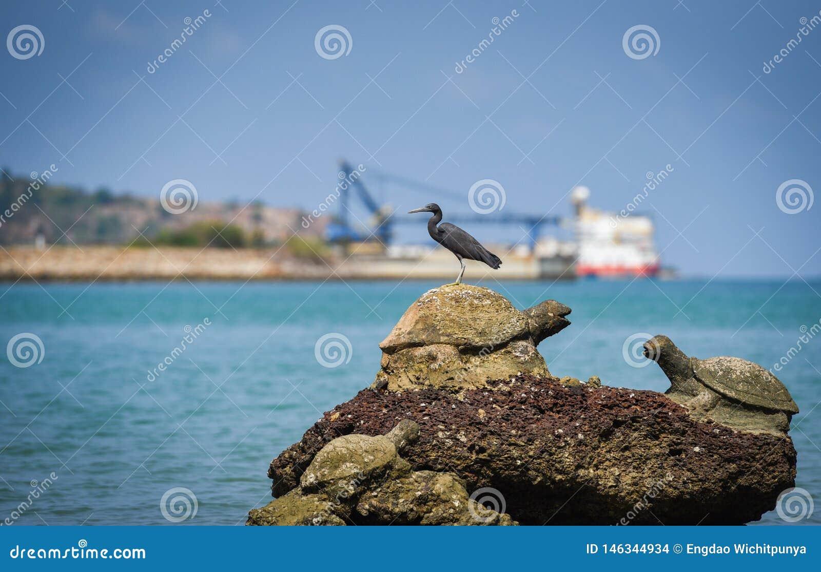 Vogel auf den Felsen am Fischerboothintergrund des Buchtküstenseeozeans