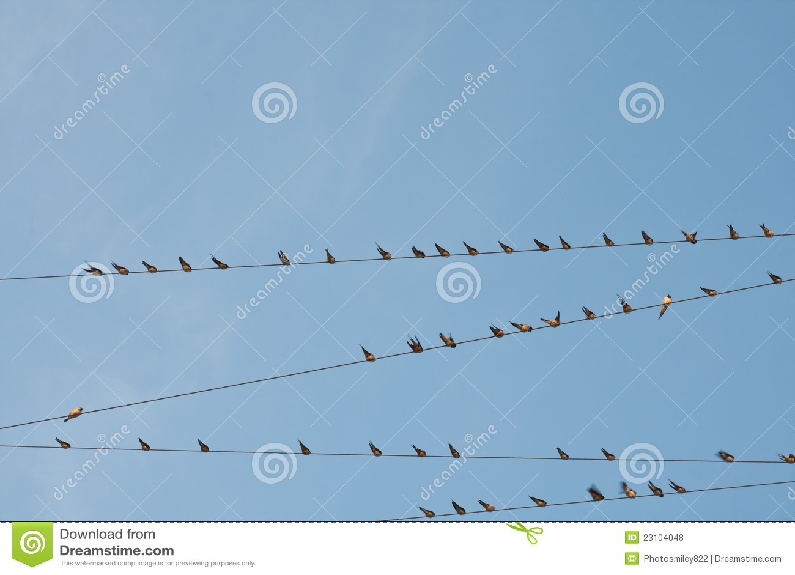 Vogel auf einem Drahtseil stockfoto. Bild von schönheit - 23104048