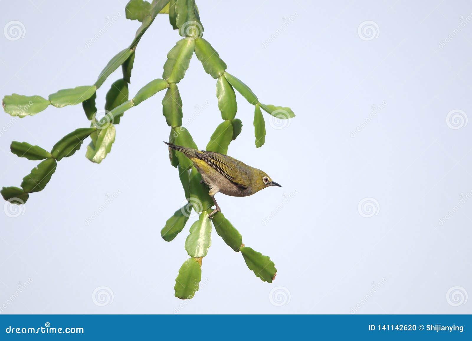 Vogel auf Grünpflanze