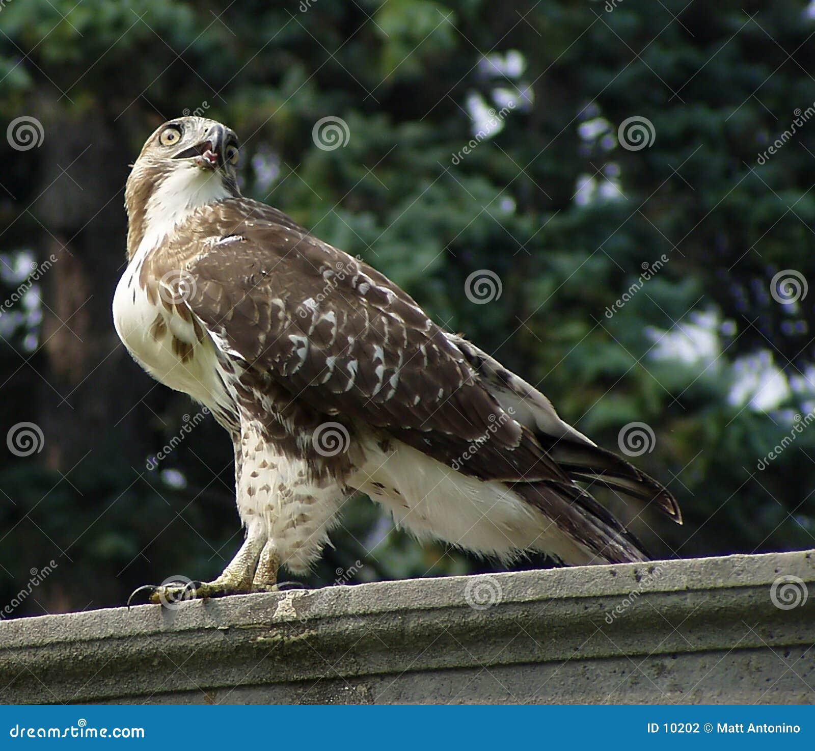 Vogel-Auge