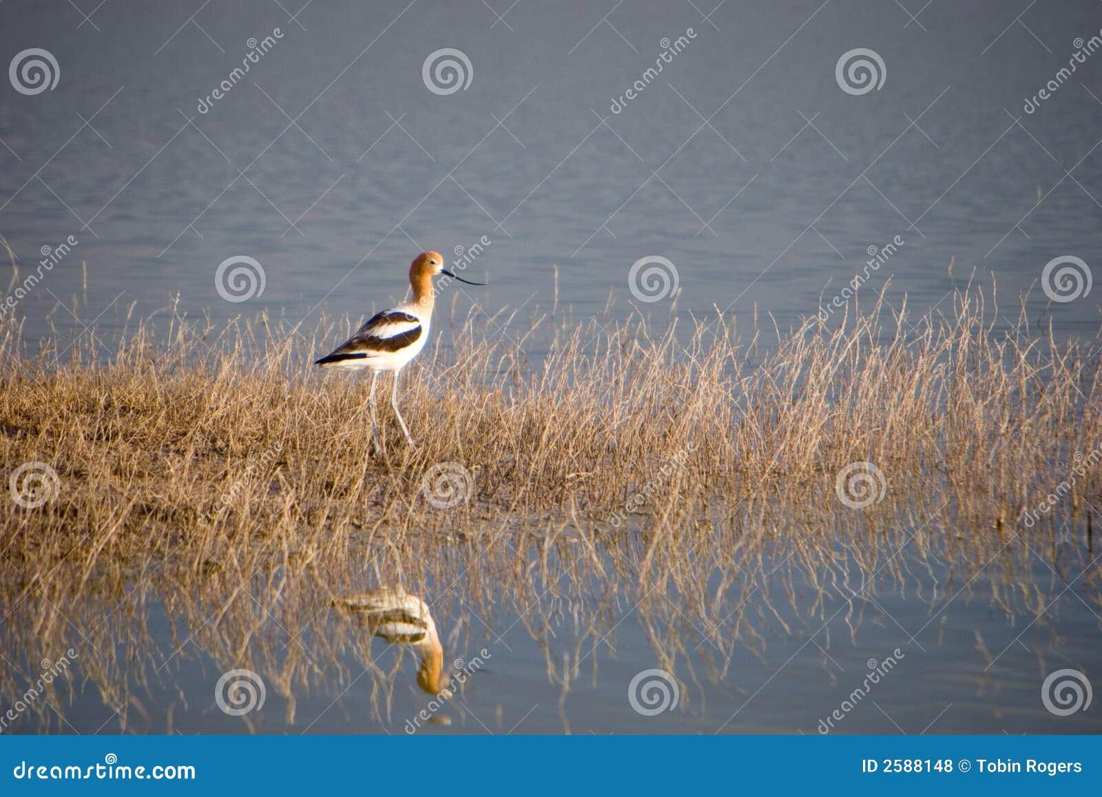 Vogel bij Meer