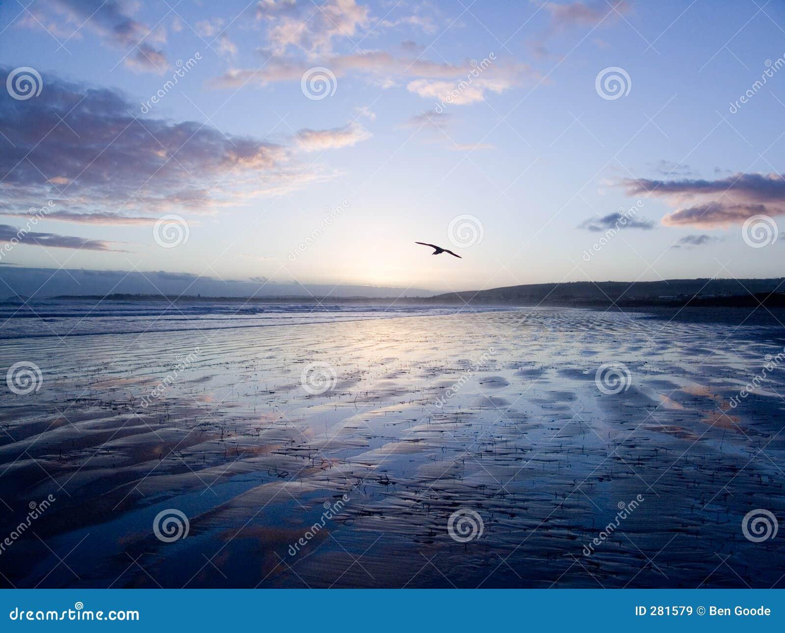 Vogel die over Zand glijdt