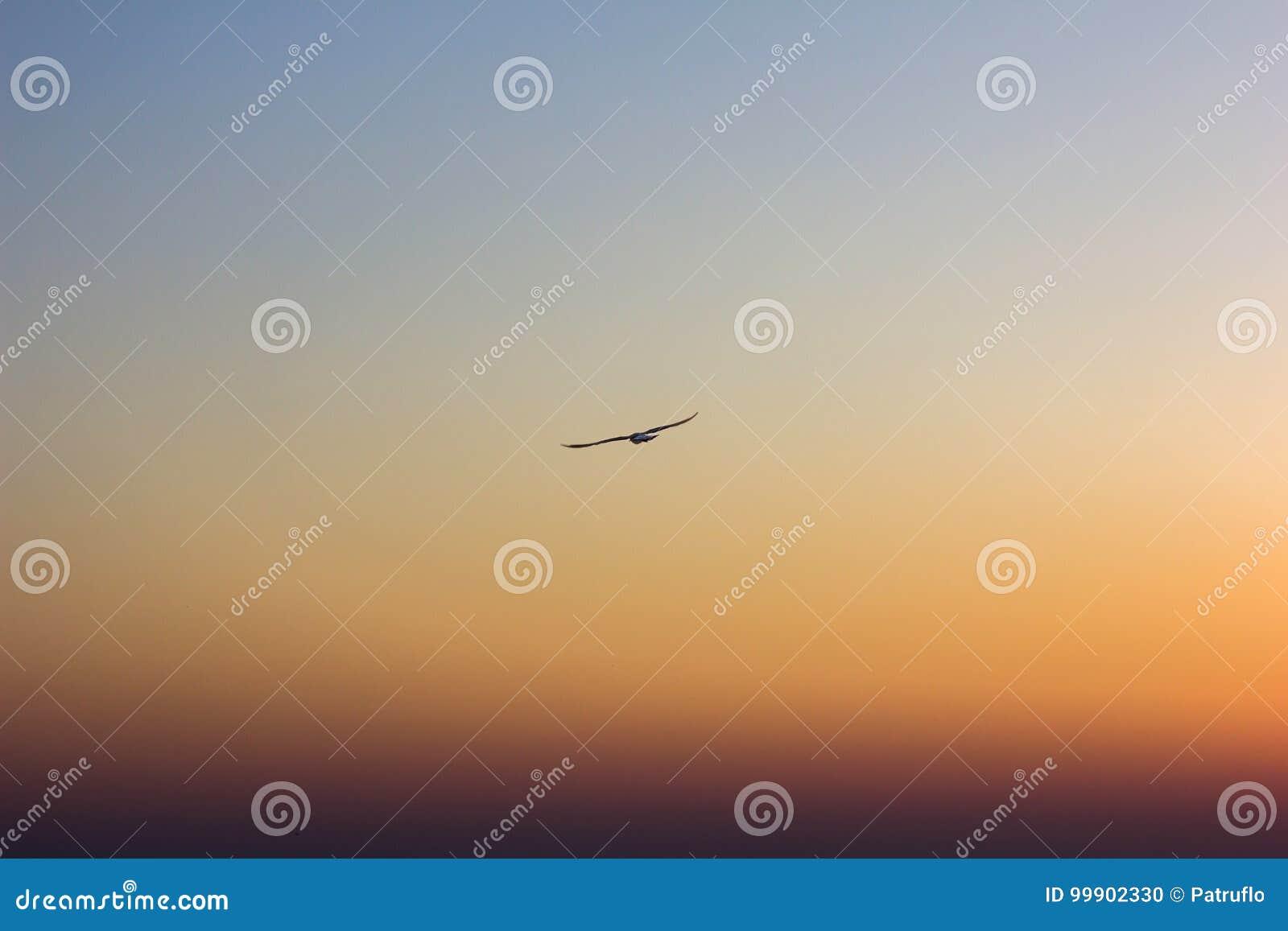 Vogel die in zonsondergang/vrijheidsconcept vliegen