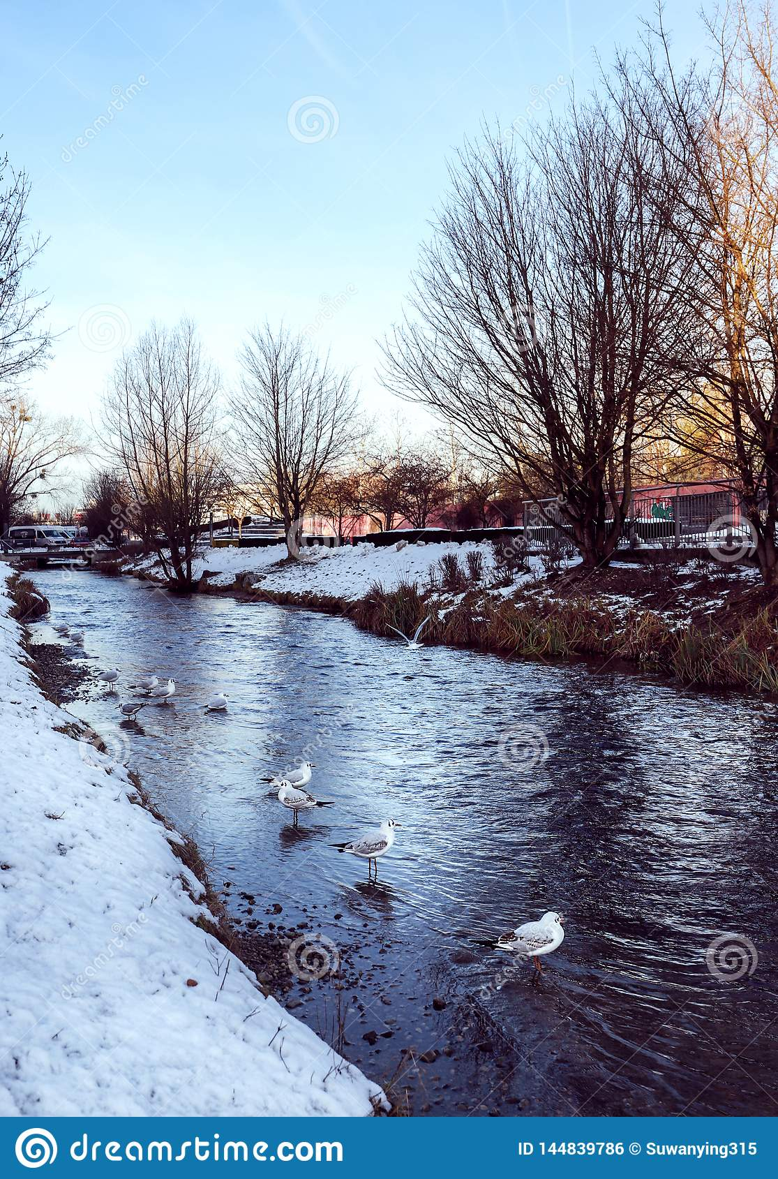 Vogel door het meer in de winter