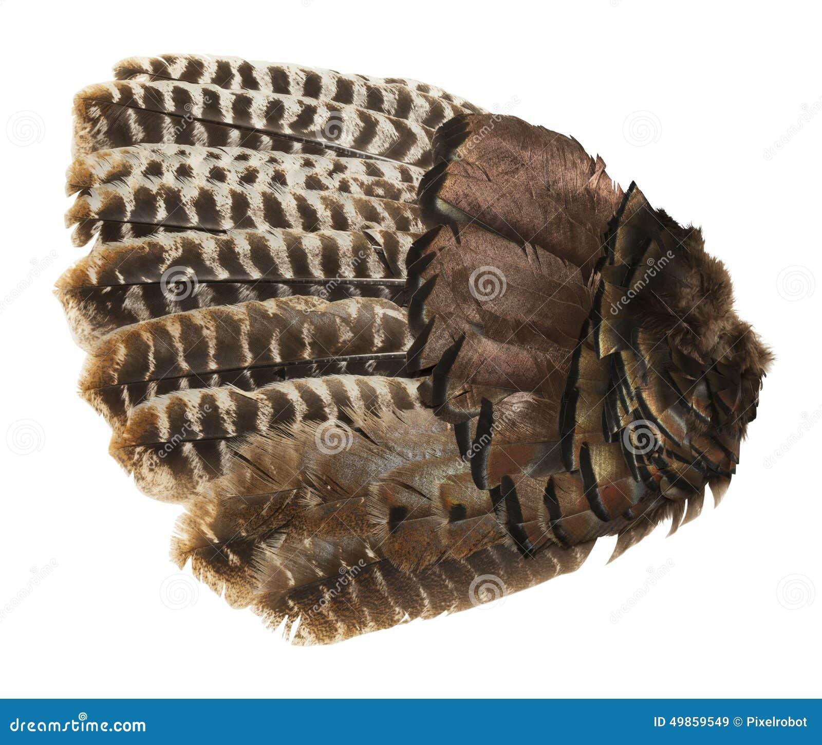 Vogel-Flügel stockbild. Bild von leute, truthahn, tier - 49859549
