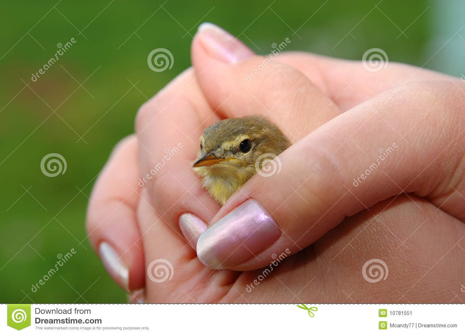 Vogel in het geven handen