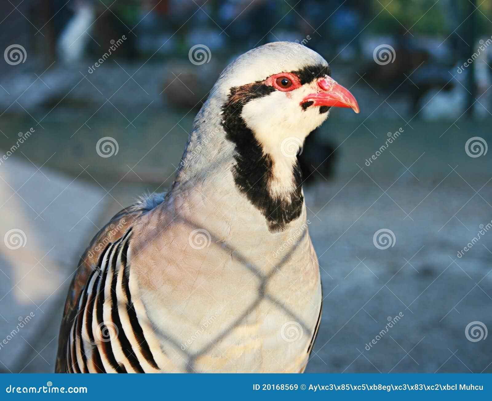Vogel hinter Rahmen stockbild. Bild von metall, vögel - 20168569