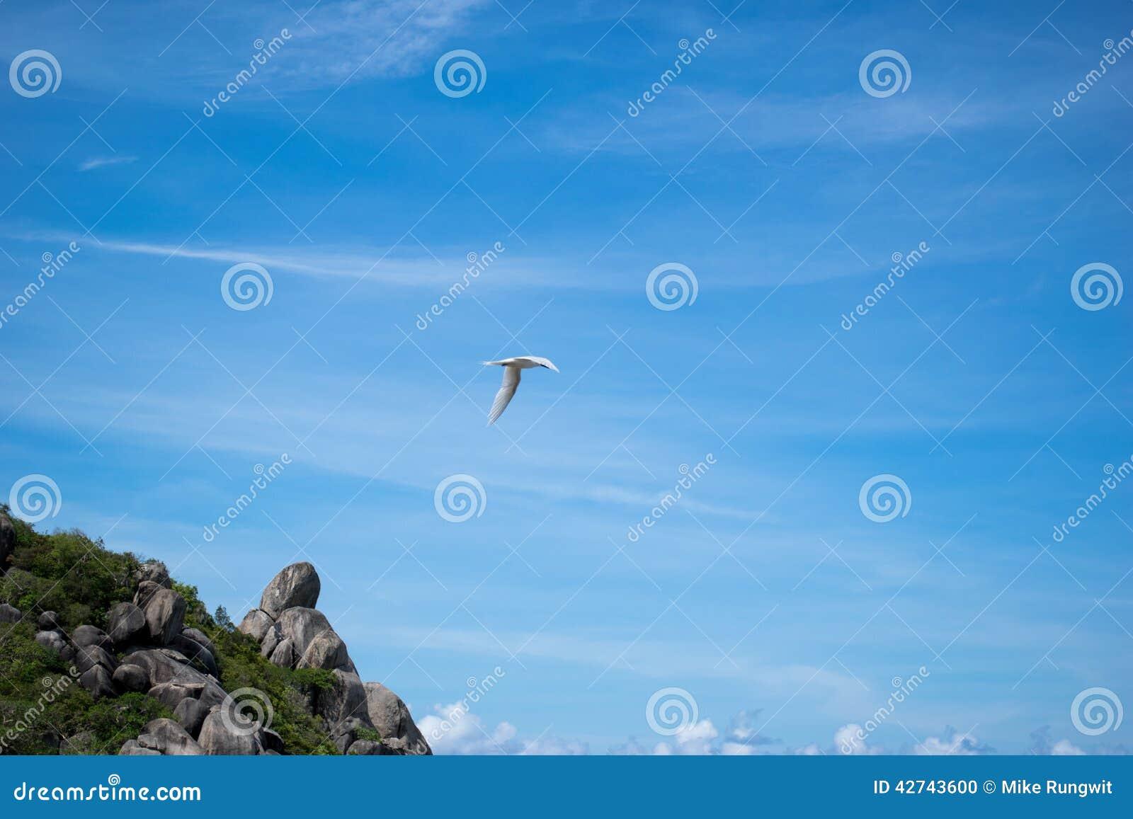 Vogel im Himmel