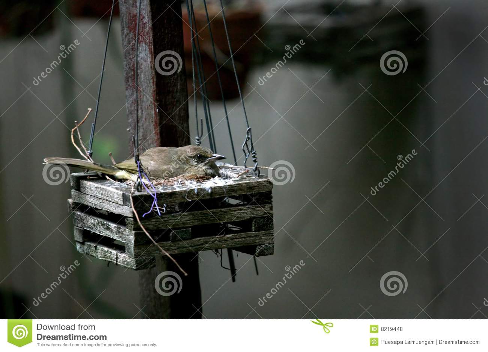 Vogel im Nest