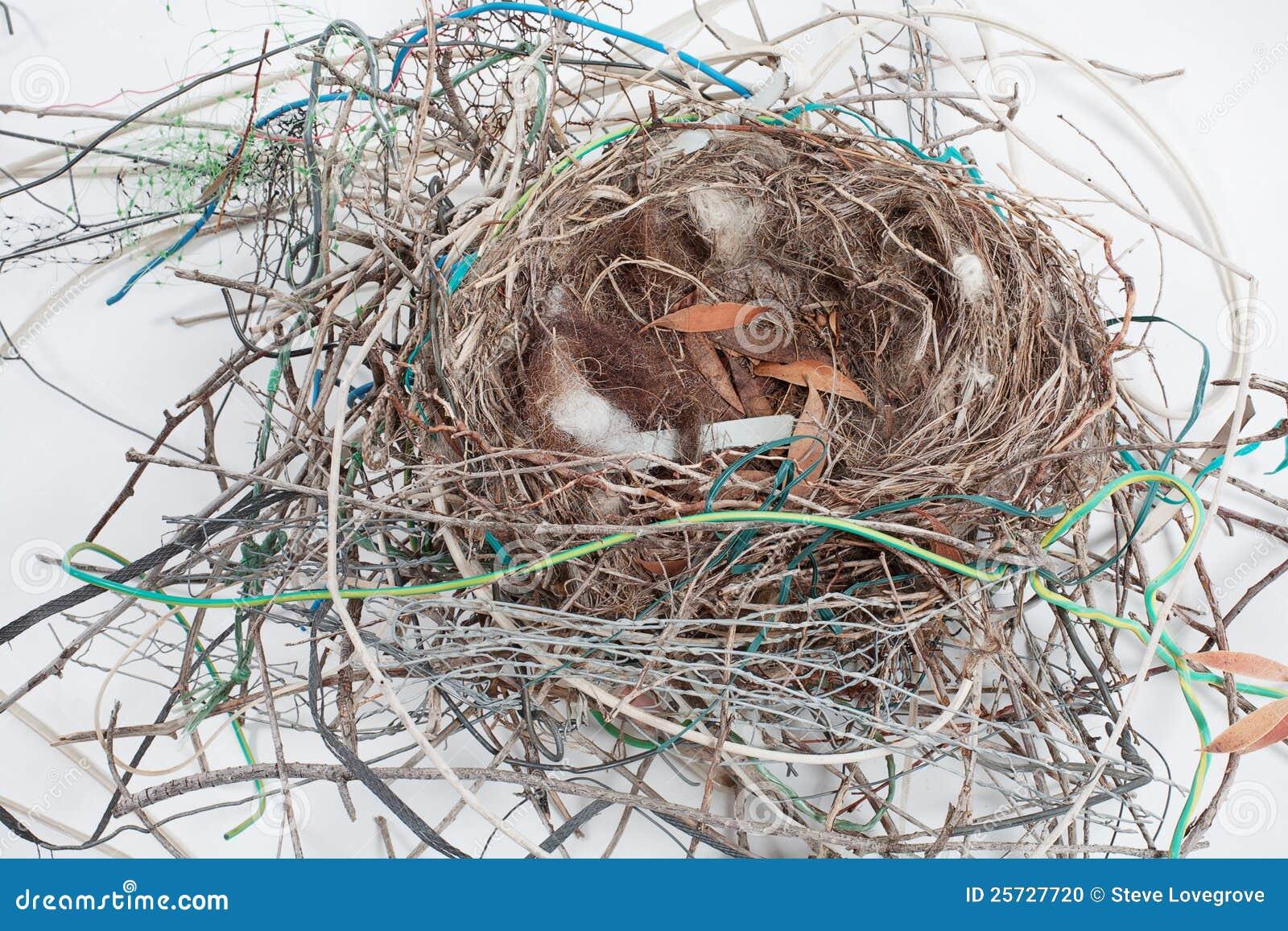 vogel nest stockfoto bild von lebensraum verschachtelung 25727720. Black Bedroom Furniture Sets. Home Design Ideas