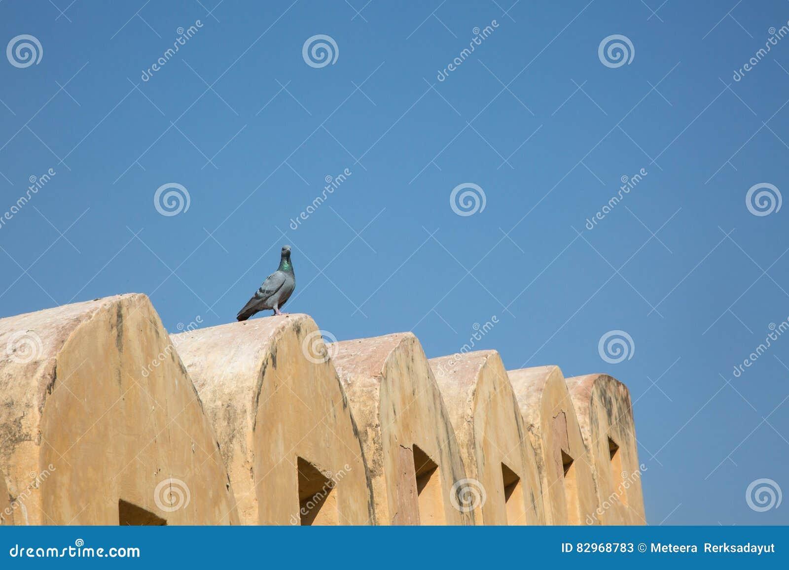 Vogel op de muur van Mahargarh-Fort wordt geïsoleerd dat