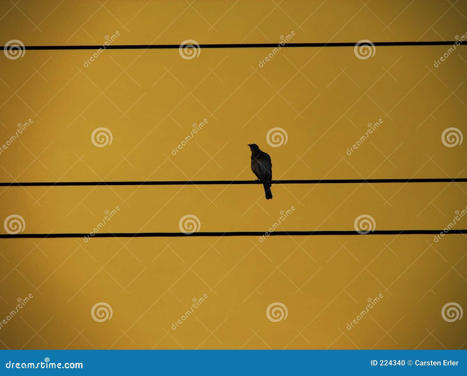 Vogel op een Draad