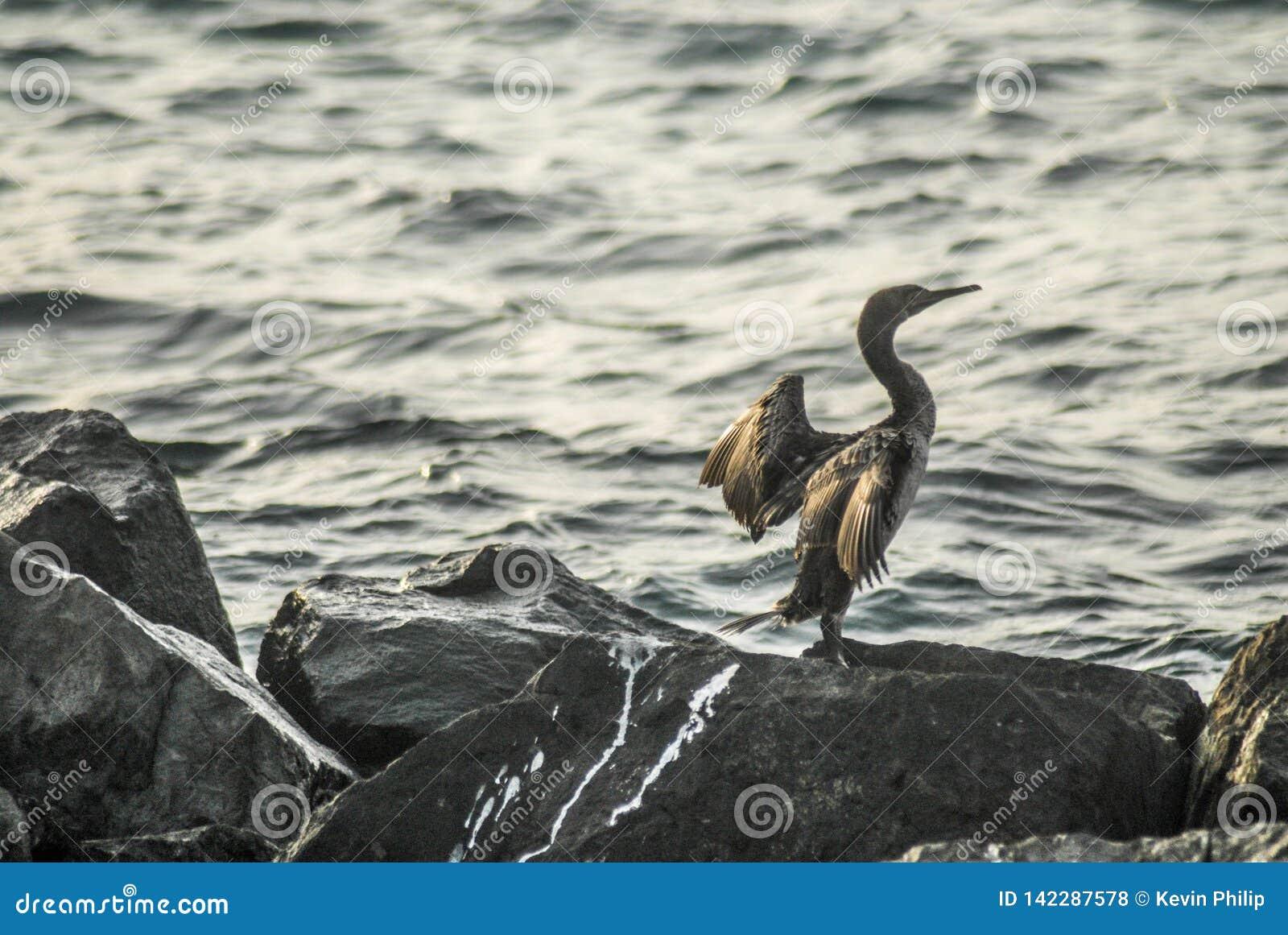 Vogel op een rots