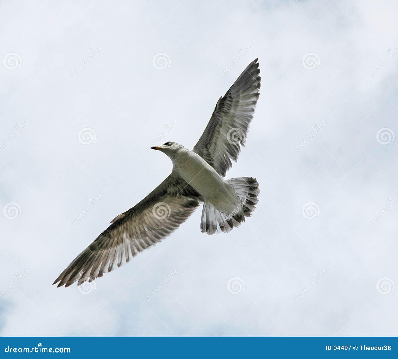 Vogel tijdens de vlucht