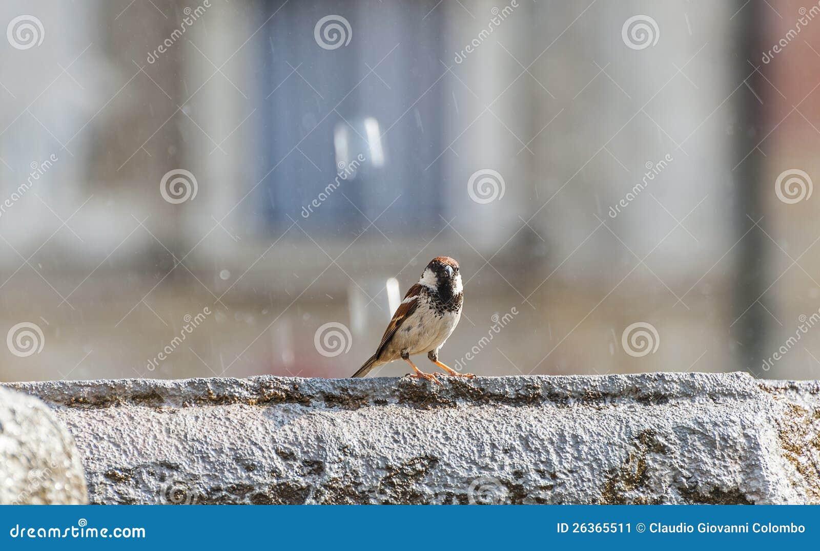 Vogel in Trento