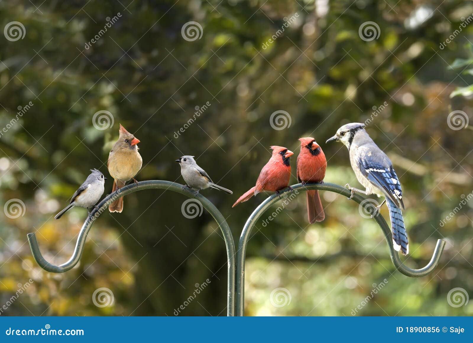 Vogel-Verschiedenartigkeit-Sitzung