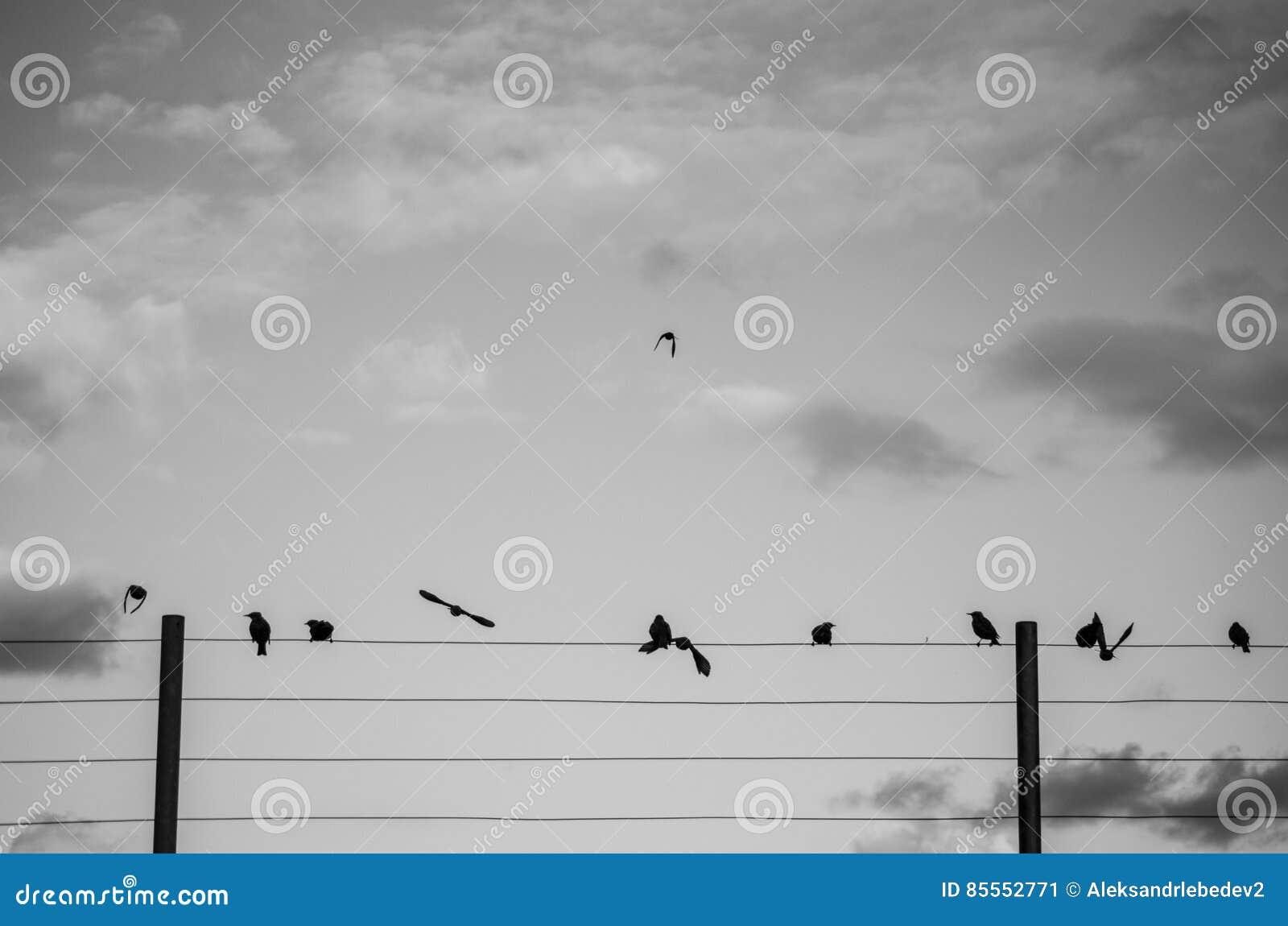 Vogel warten TP fliegen