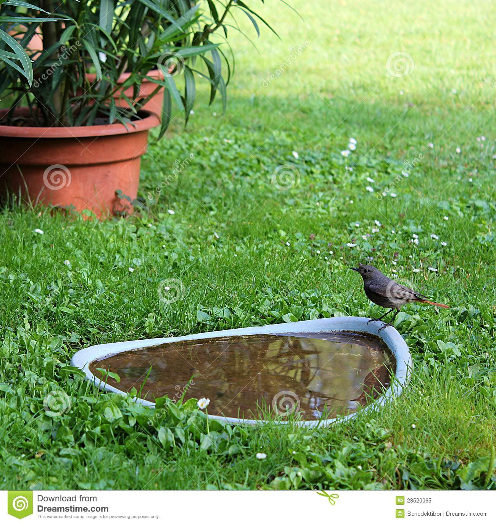 Vogel am Wasser