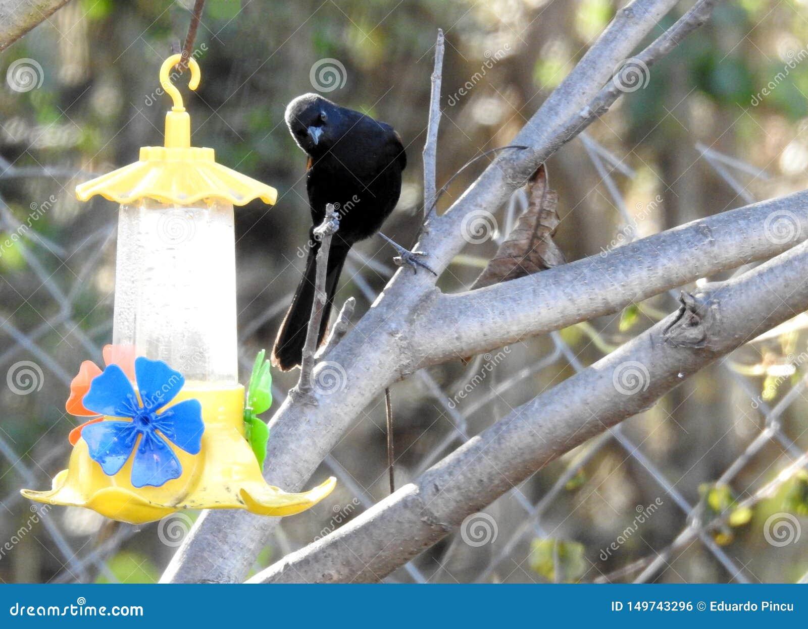 Vogelbeobachtungswasserbrunnen